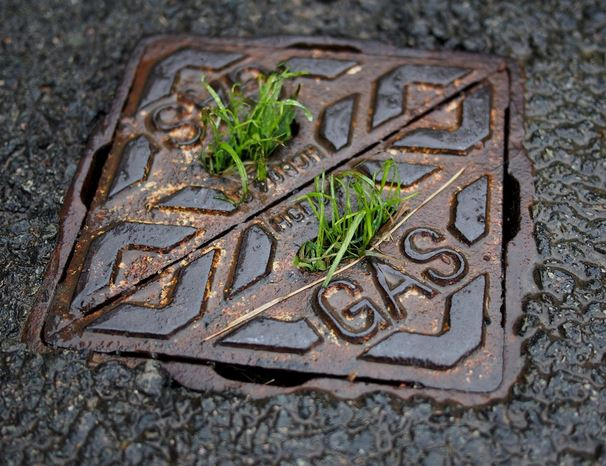 How Much Does It Cost to Clear a Blocked Drain in Sydney